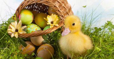 Wie schreibt man authentische Ostergrüße?