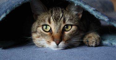 Ambra für Katzen, die alleine sein wollen