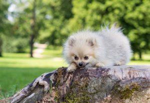 Erbrechen bei Hunden: Ipecacuanha hilft