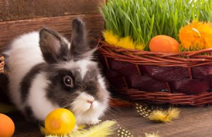 Osterkuchen passend zum Fest