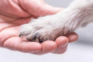 Wie Sie Ihre Angst vor Hunden überwinden können