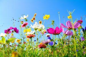 Vermehrung von Pflanzen: So vermehren Sie Sommerblumen