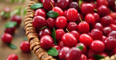 Gesundheitlicher Nutzen der Cranberry