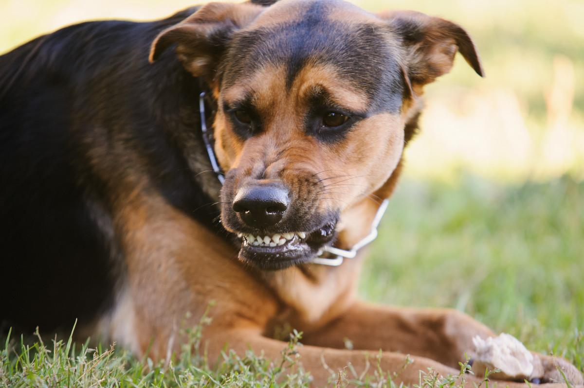 Angst vor Hunden – Was tun?