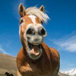 Luffa hilft dem Pferd bei Schnupfen