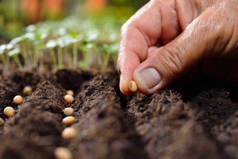 Frühjahr: Welche Samen müssen Sie säen?
