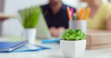 Office-Pflanzen - Machen Sie ihr Büro schöner!