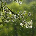 Hautprobleme im Frühling durch Pollen? Natürliche Pflegetipps