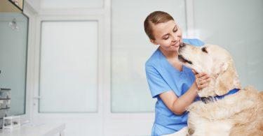 Strontium carbonicum hilft Hunden mit Hüftgelenksschmerzen