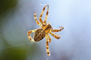 Schnelltherapie bei Spinnenphobie