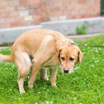 Darmsanierung bei Hunden