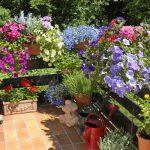 Blumenkästen gestalten – So einfach geht es