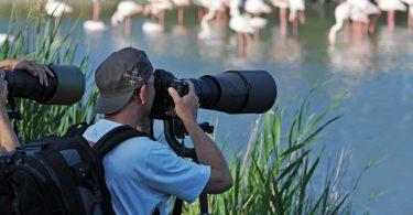 Tierfotografie: Allgemeine Tipps und Hinweise