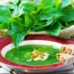 Heilpflanze Brennnessel: Rezepte und Wirkung
