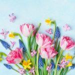 Fototricks für tolle Bilder vom Frühling