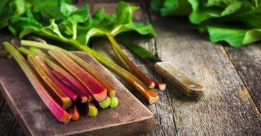 Rhabarber hat Saison: Rezept für süßen Rhabarbersenf