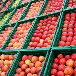 Die bekanntesten Apfelsorten und ihre Verwendung