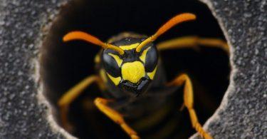 Auf Wespenstiche bei Kindern richtig reagieren