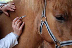 Lindern Sie die Nebenwirkungen von Wurmkur und Impfung beim Pferd