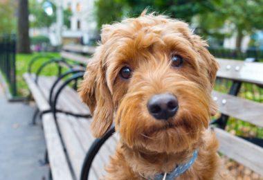 Schwindel oder Vestibulärsyndrom beim Hund homöopathisch behandeln
