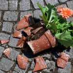 Homöopathie für Pflanzen: Verletzungen behandeln
