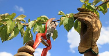 Der Garten im August – das müssen Sie jetzt erledigen
