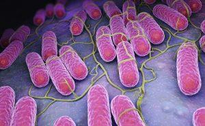 So beugen Sie einer Salmonelleninfektion vor