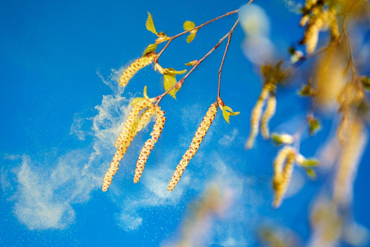 Allergien: So schützen Sie sich vor Pollen im Haus