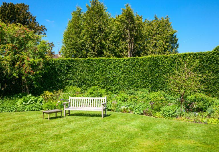 Gartengestaltung - diese Baumarten eignen sich für eine schöne Hecke