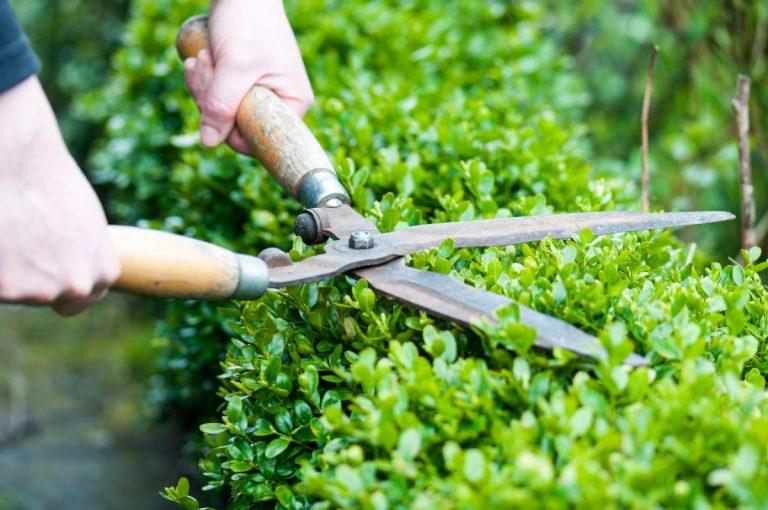 Gartengestaltung: Diese Sträucher eignen sich für eine Hecke