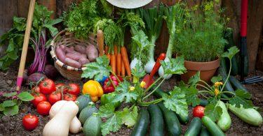 Gemüse aus dem Garten: 9 pflegeleichte Gemüsesorten für Gartenneulinge