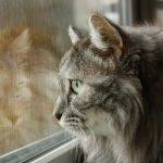 Echinacea stärkt das Immunsystem der Katze