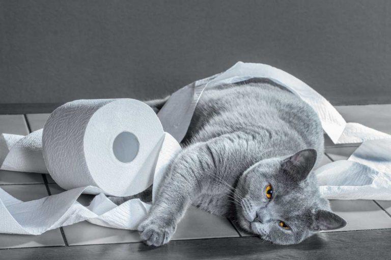 Mit Solidago die Nieren und die Blase der Katze unterstützen
