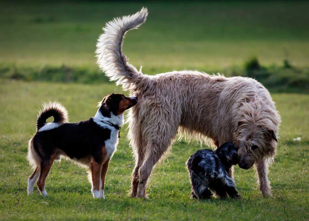 Verdauungsstörungen beim Hund homöopathisch behandeln