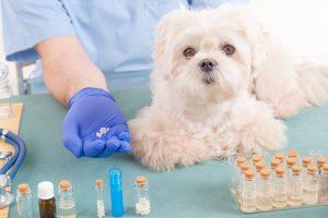 Homöopathie für Tiere – Hilft sie wirklich?