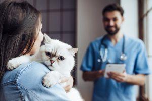 Lernen Sie homöopathische Komplexmittel für Ihre Katze kennen
