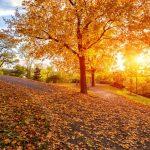 Die 7 besten Zitate für Ihre Rede zum Herbst-Beginn