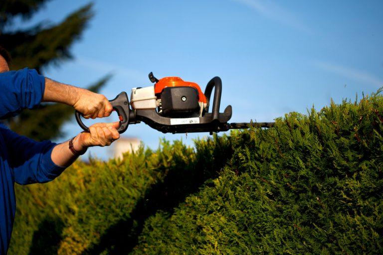 Gartengestaltung - das müssen Sie bei der Planung einer Hecke beachten