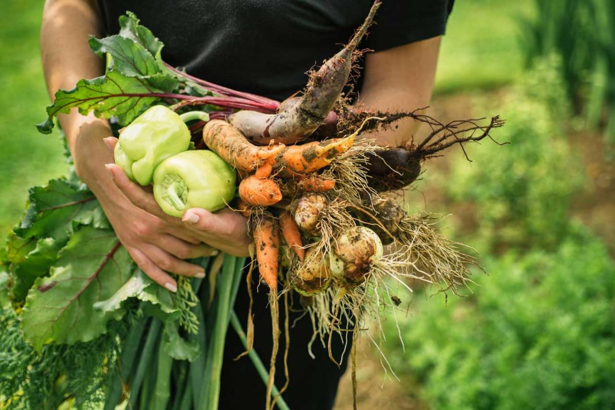 Wie Sie mit natürlichen Giftstoffen in Bio-Lebensmittel umgehen