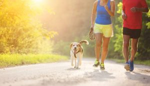 Tipps für Läufer zum Umgang mit Hunden