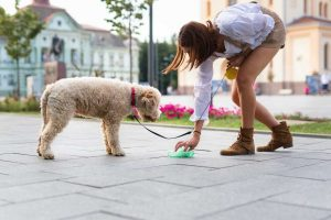 China für Hunde bei Verdauungsstörungen