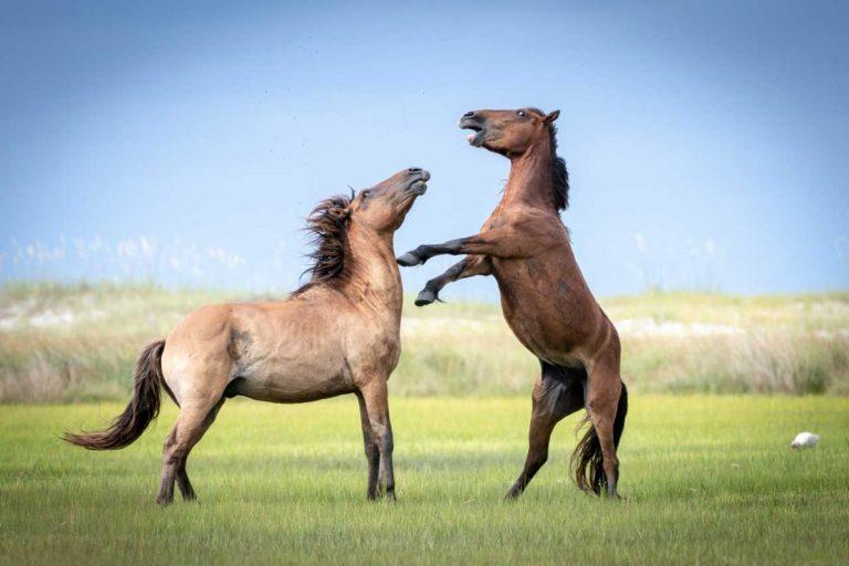Homöopathie für Pferde bei Knochenbrüchen