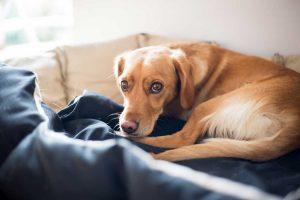 Nutzen Sie Graphites für Hunde mit Magen- und Darmerkrankungen