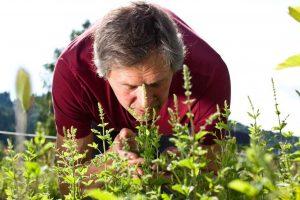 Darmsanierung mit Heilpflanzen
