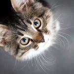 Konstitutionsmittel für Katzen – Phosphorus