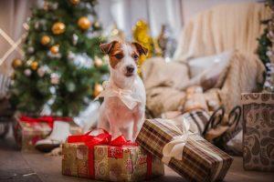 Verzichten Sie darauf, Tiere zu Weihnachten zu verschenken