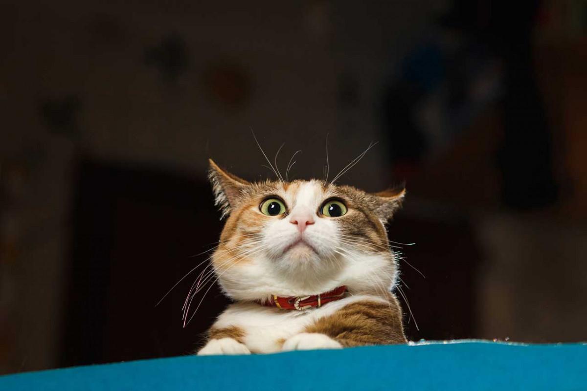 Geräuschempfindliche Katzen mit homöopathischen Mitteln unterstützen