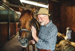 Homöopathie für Pferde: Formica rufa bei Arthritis und Allergien