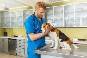So können Sie Furunkel beim Hund homöopathisch behandeln