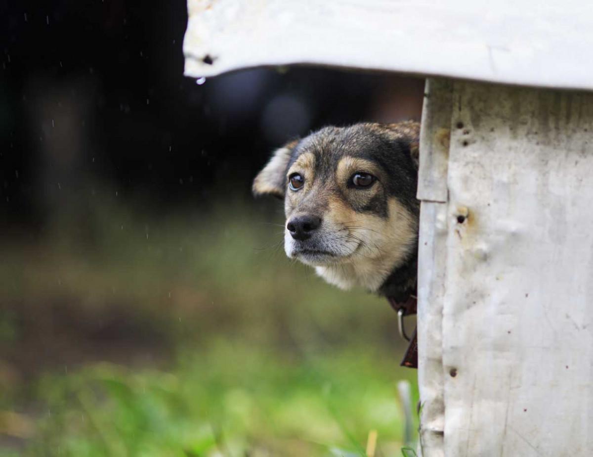 Veratrum album für Hunde bei Folge von Schreck oder Aufregung